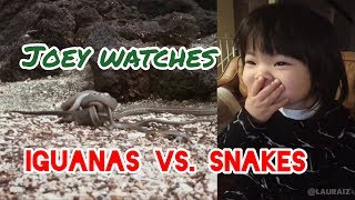 Joey Watches Iguanas vs. Snakes on Planet Earth 2