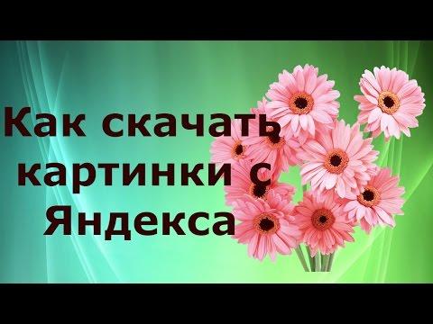 Как скачать картинки с Яндекса