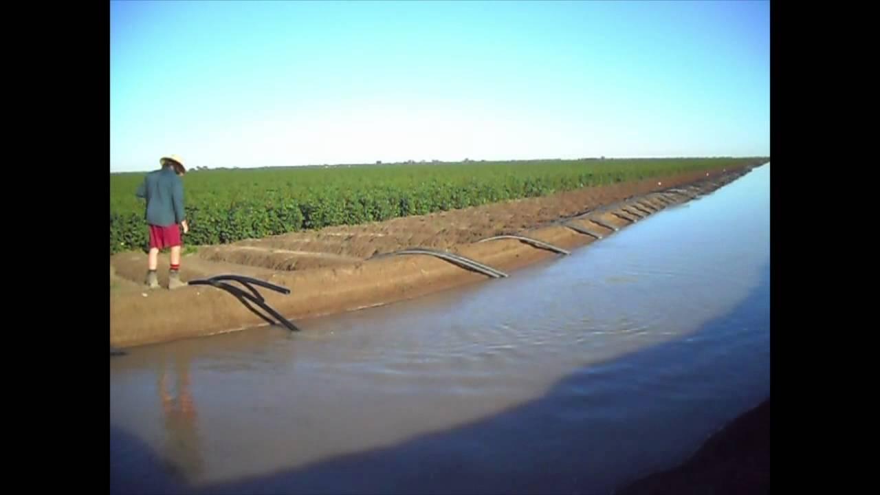 Australia Cotton Farming Siphon Flood Irrigation Youtube