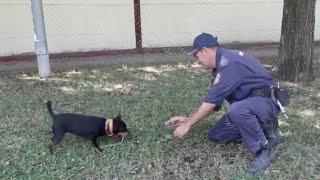 Greta, el perro de la Policía Nacional que detecta acelerantes del fuego tras un incendio