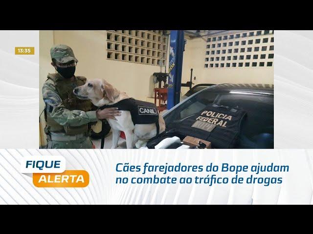 Cães farejadores do Bope ajudam no combate ao tráfico de drogas