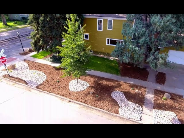 Low Budget, Low Maintenance Landscaping - YouTube