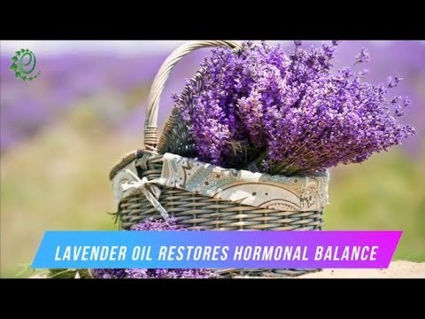 13-surprising-benefits-of-lavender-essential-oil-for-skin,-hair,-and-more-|-organic-facts
