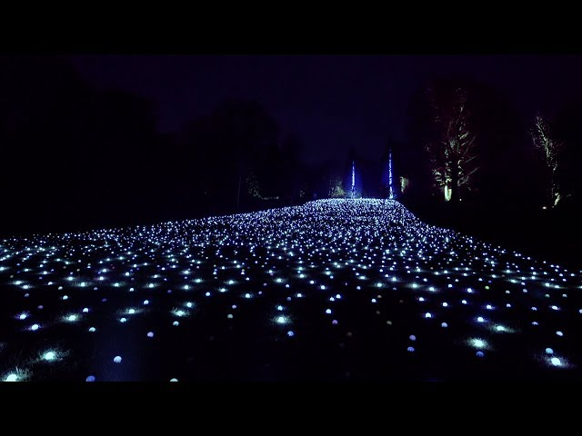 Sea of Light: Blenheim Palace