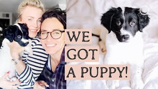 MEET OUR PUPPY! and How Getting a Pet in USA is Different than Sweden