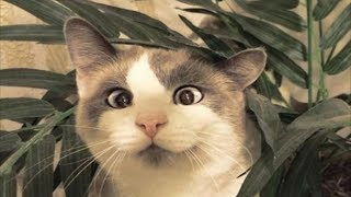 THE MOST CUTE AND FUNNY ANIMALS! JOKES 2019