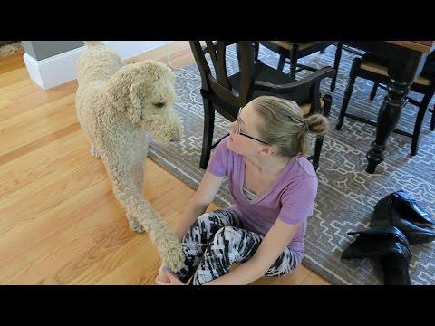SERVICE DOG ALERTS LOW BLOOD SUGAR (4.21.16)