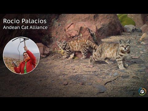 Andean Cat Alliance · Rocio Palacios · SF Expo 2016