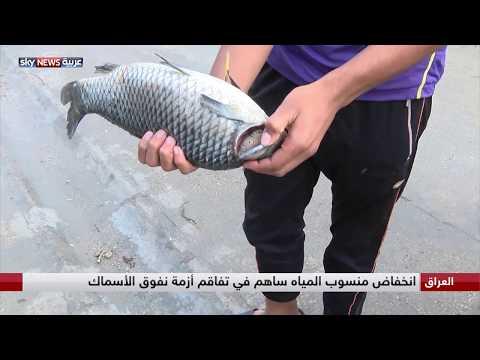 العراق يخسر آلاف الأطنان من الأسماك خلال 24 ساعة