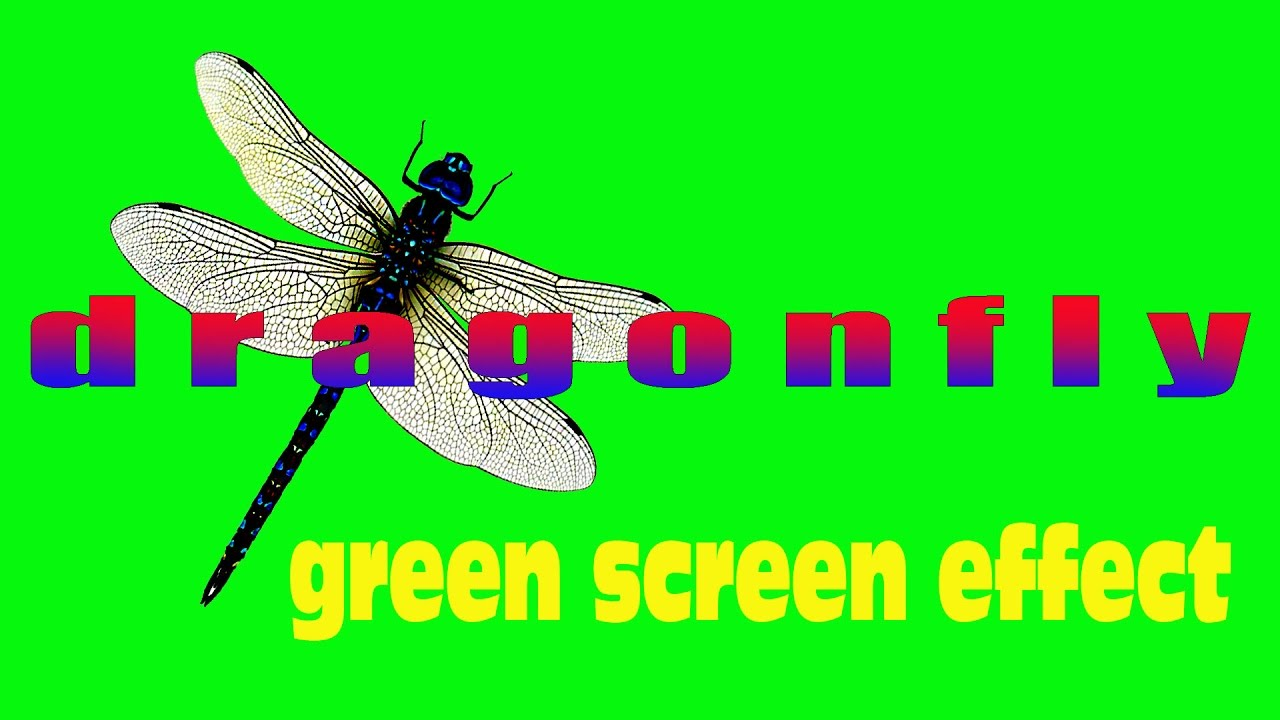 green screen effect dragonfly стрекоза youtube