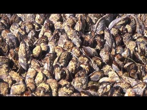 Ecosystems of California: Intertidal