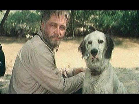 Судьба собаки фильма \