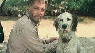 """Судьба собаки фильма """"Белый Бим Черное ухо"""""""