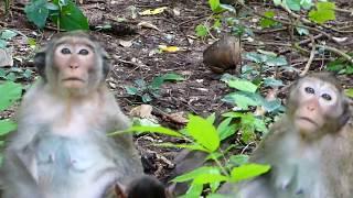 pity baby monkey