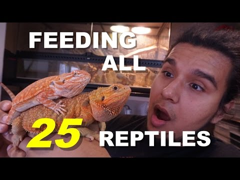 FEEDING ALL OF MY ANIMALS 😱😱😱 25 Pets IN Total !!!