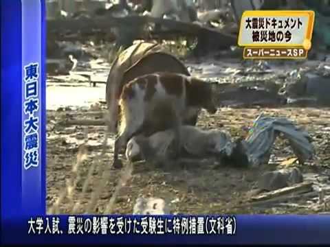 Эпаньоль спасает англичанина. Кадры из Японии.