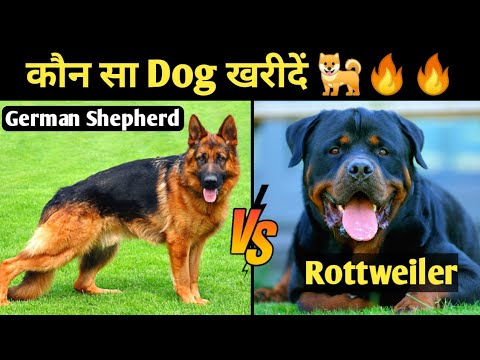 German Shepherd v/s Rottweiler Dog Which Is Best For You || Rottweiler dog Vs German Shepherd dog