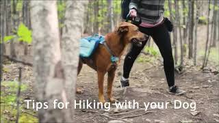 Hiking Tips from Kurgo, featuring Oakley and Amber