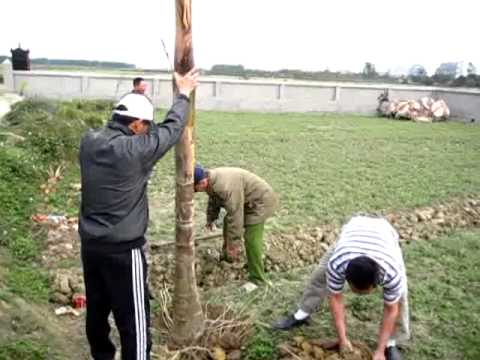 Lang van hoa Thap phan 2012.flv