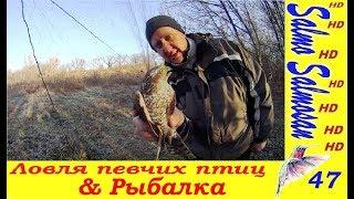 Ловля певчих птиц Рыбалка Чижи Овсянки Репел Щуки Окуня