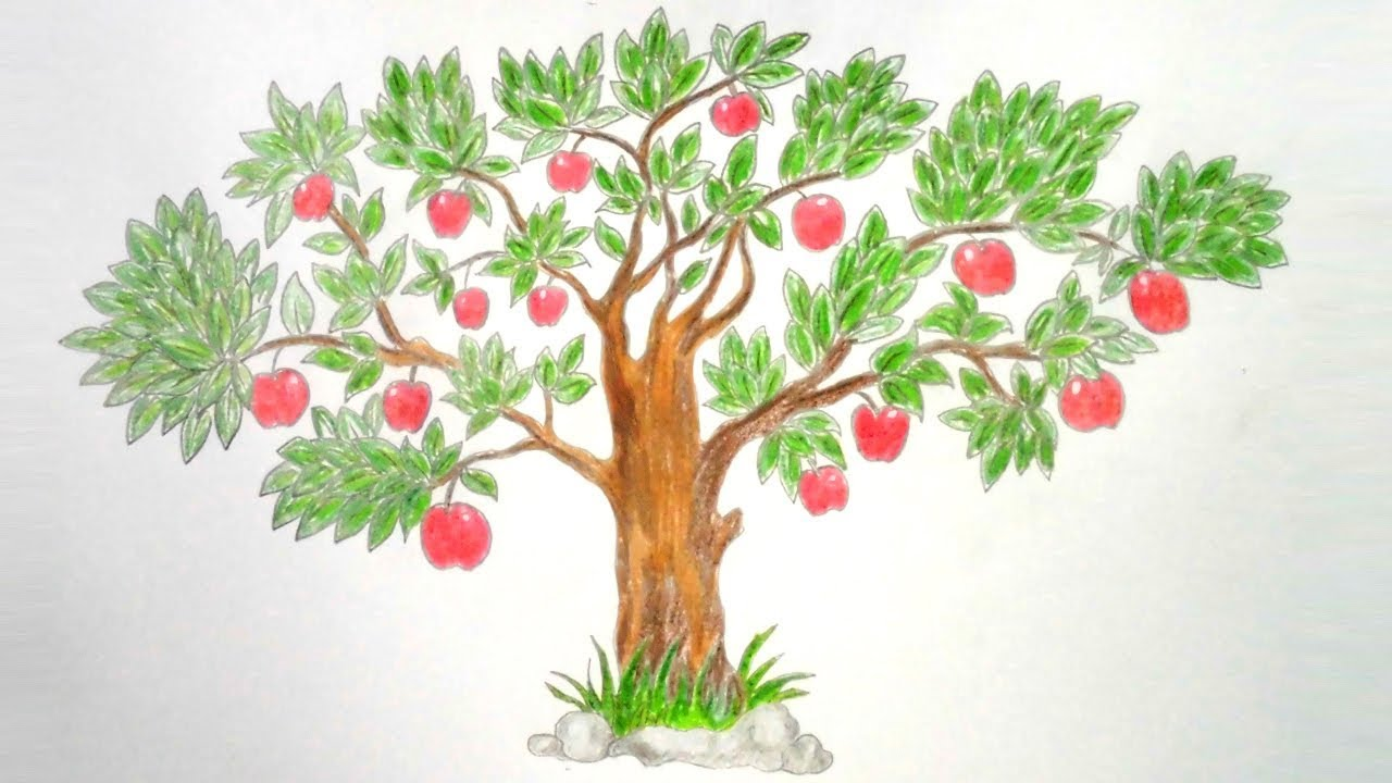 How to draw Apple Tree step by step ||very easy|| - YouTube