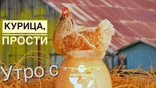 Простите курицы | Зеленый борщ без мяса | экояйцо | веганский  щавелевый суп | #Авиамания