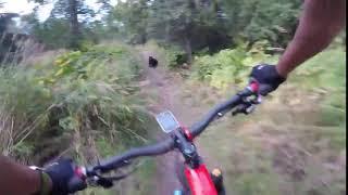 Biker runs into bear