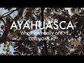 My AYAHUASCA Diary: What we all are. | PART 3