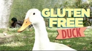 Gluten Free Expo 2013 SAVE THE DATE