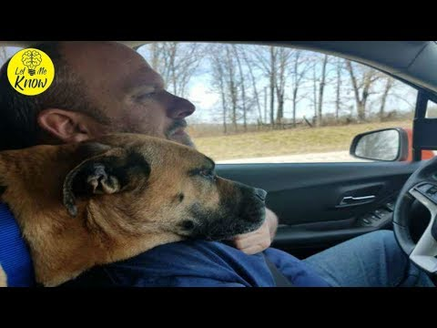 stray-dog-sees-open-car-door-and-decides-to-jump-into-front-seat