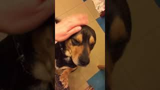 Видео 2    Алик   Барсик   возьму собаку в хорошие руки бесплатно
