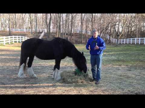Brian's Response to Day 15 Healing with Horses Tele-Summit