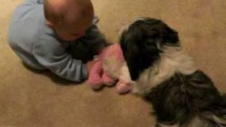 baby vs. puppy tug-o-war