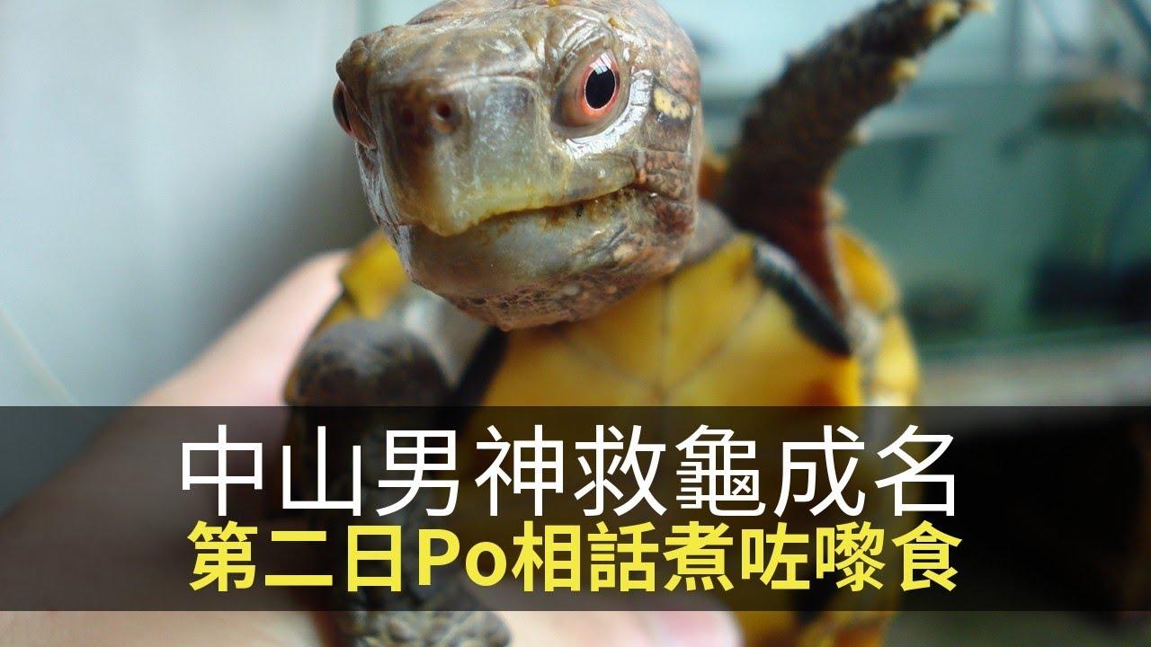 思浩分享中山男神救龜成名,第二日Po相話煮咗嚟食!(大家真風騷) - YouTube