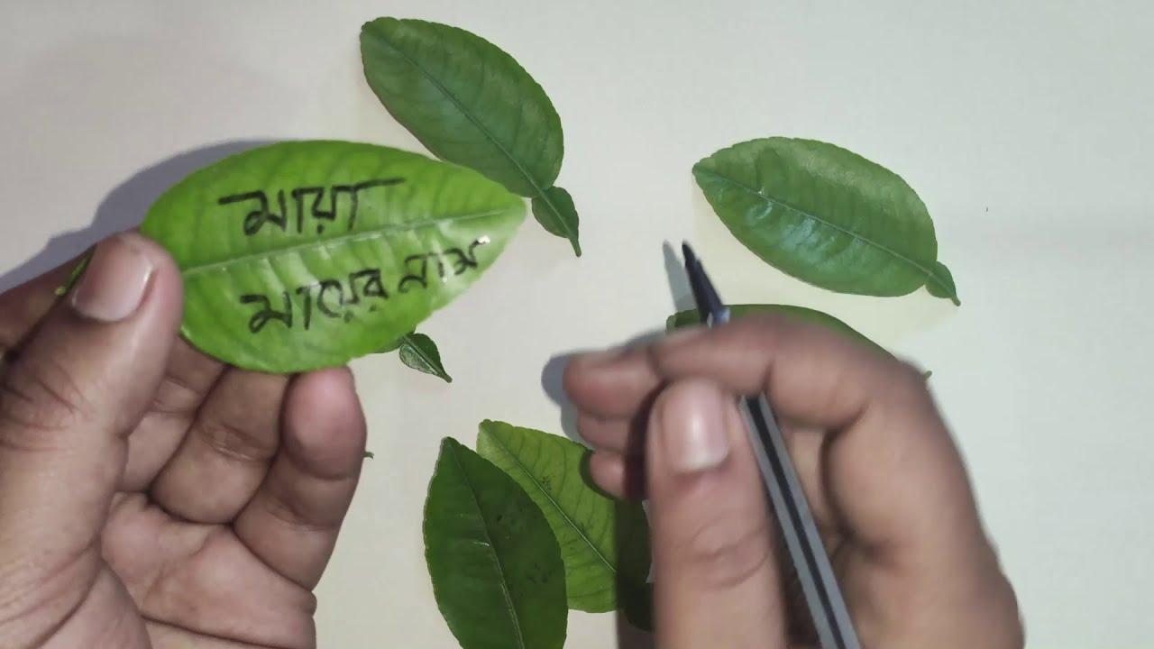 Download লেবু পাতায় নাম লিখে বশিকরন করুন ! Lebu pata dia Boshikoron