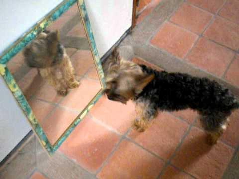 Eden devant le miroir funnydog tv for Derniere volonte devant le miroir