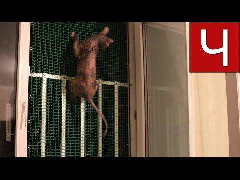видео: Сетка антикошка всесезонная своими руками | Решётка от выпадения кошек из окон