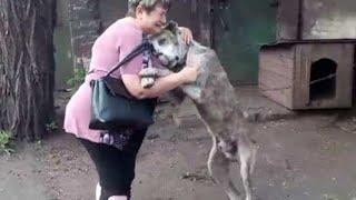 Este Perrito Ve A Su Dueña Años Después De Desaparecer, Su Reacción Te Hará Llorar 😨