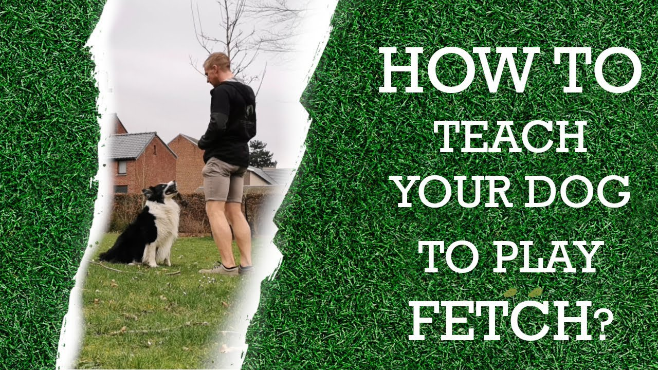 How to teach your dog to fetch