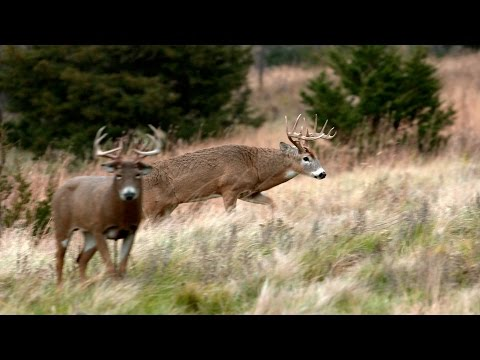 Hunting Deer with Decoys- South Dakota Decoy Domination Part 2 of 2