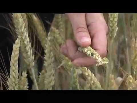 Vidéo de conseiller/ère agricole