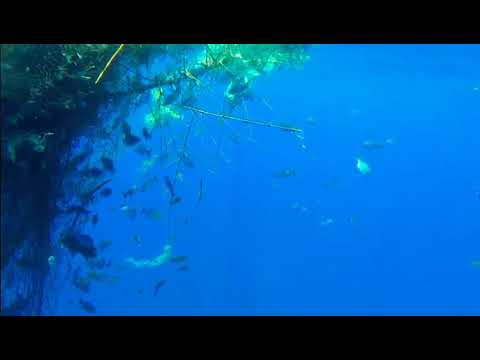 Floating Debris Underwater fish footage in Chennai