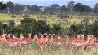 Mikumi National Park (Tanzania)