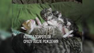 видео Собака вскормила пятерых котят