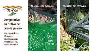 Abono orgánico Terra Zan   Parcelas demostrativas   Cultivo de cebolla puerro