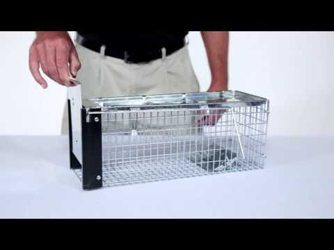 How to Set: Havahart® X-Small 1-Door Trap Model #0745 for Chipmunks, Rats & Squirrels