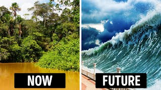 Will We Survive If We Lose the Amazon Rainforest?