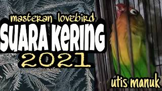 Download lagu masteran lovebird konslet suara kering