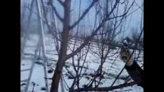 Repeat youtube video Uslužna rezidba šljive