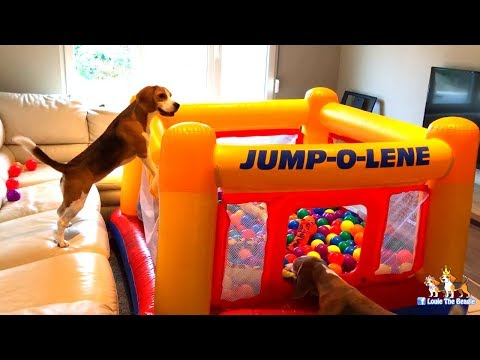 Happy Dogs get a Intex Bounce House Present : Cute Dogs Louie & Marie